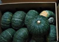旬の有機かぼちゃ